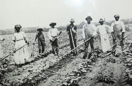 the tribulations of sharecrop farmers in the united states A new book of photographs captures a portrait of america's black  deed to the  land signified the end of their days as slaves, as sharecroppers,.