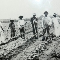 Rep. Louie Gohmert Advocates Sharecropping As Welfare Reform