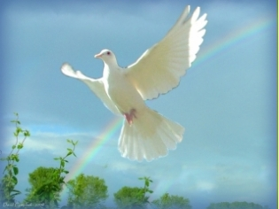 white dove 6