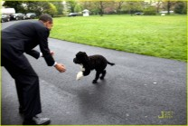 Bo Obama14