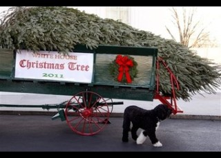 White House Tree