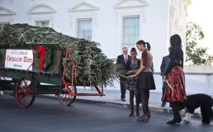 Christmas Tree15