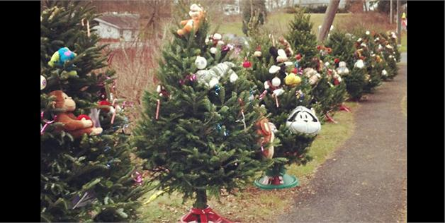 Heartbreaking photo of Christmas trees for Newtown victims goes viral