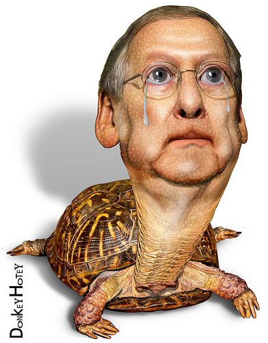 tippy turtle