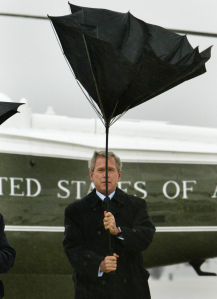 Bush with umbrella