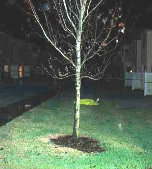 george zimmerman trees