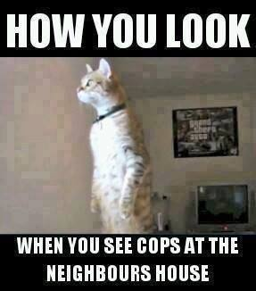 How you look when you see cops at the neighbors house