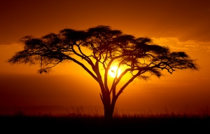 African Sunset 25