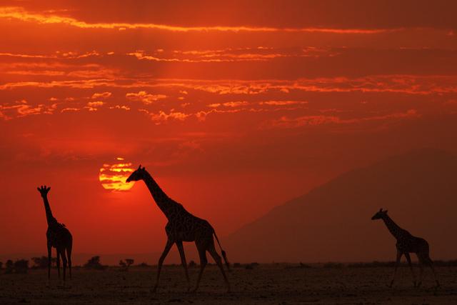 african sunset 7