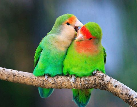 Beauty of Birds