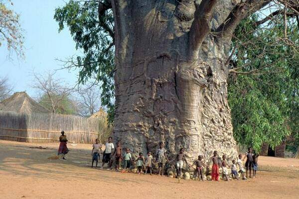 This tree in South Africa is over 2000 years old and is known as the The Tree of Life.