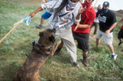 dogs attack Natives 4