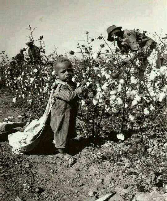 baby-picking-cotton